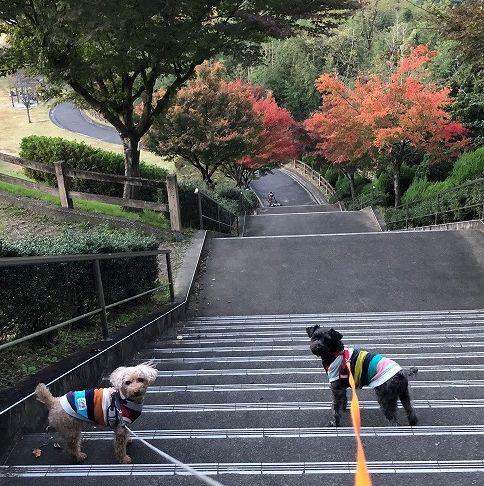 亀山公園紅葉🍁