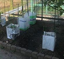 家庭菜園♪